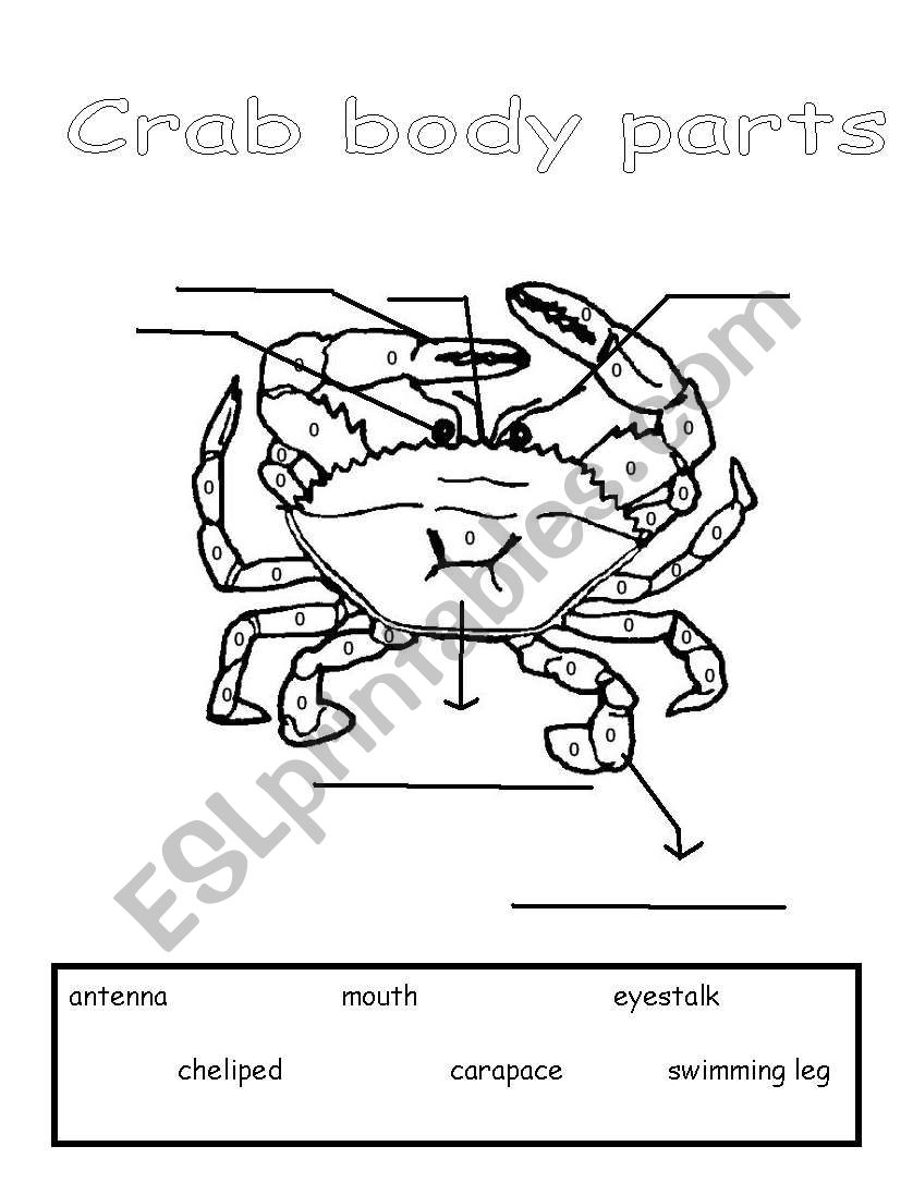 Parts of a Crab worksheet