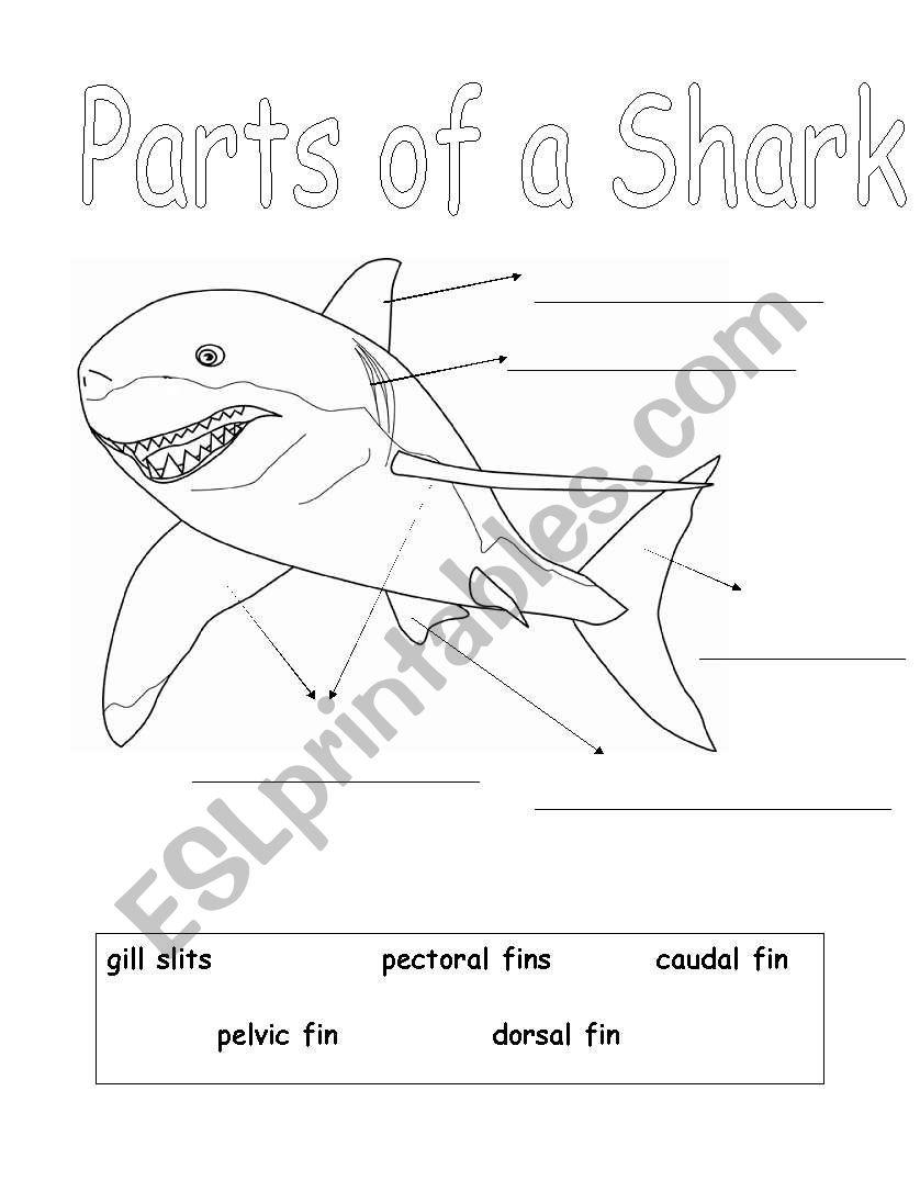 Parts of a Shark worksheet