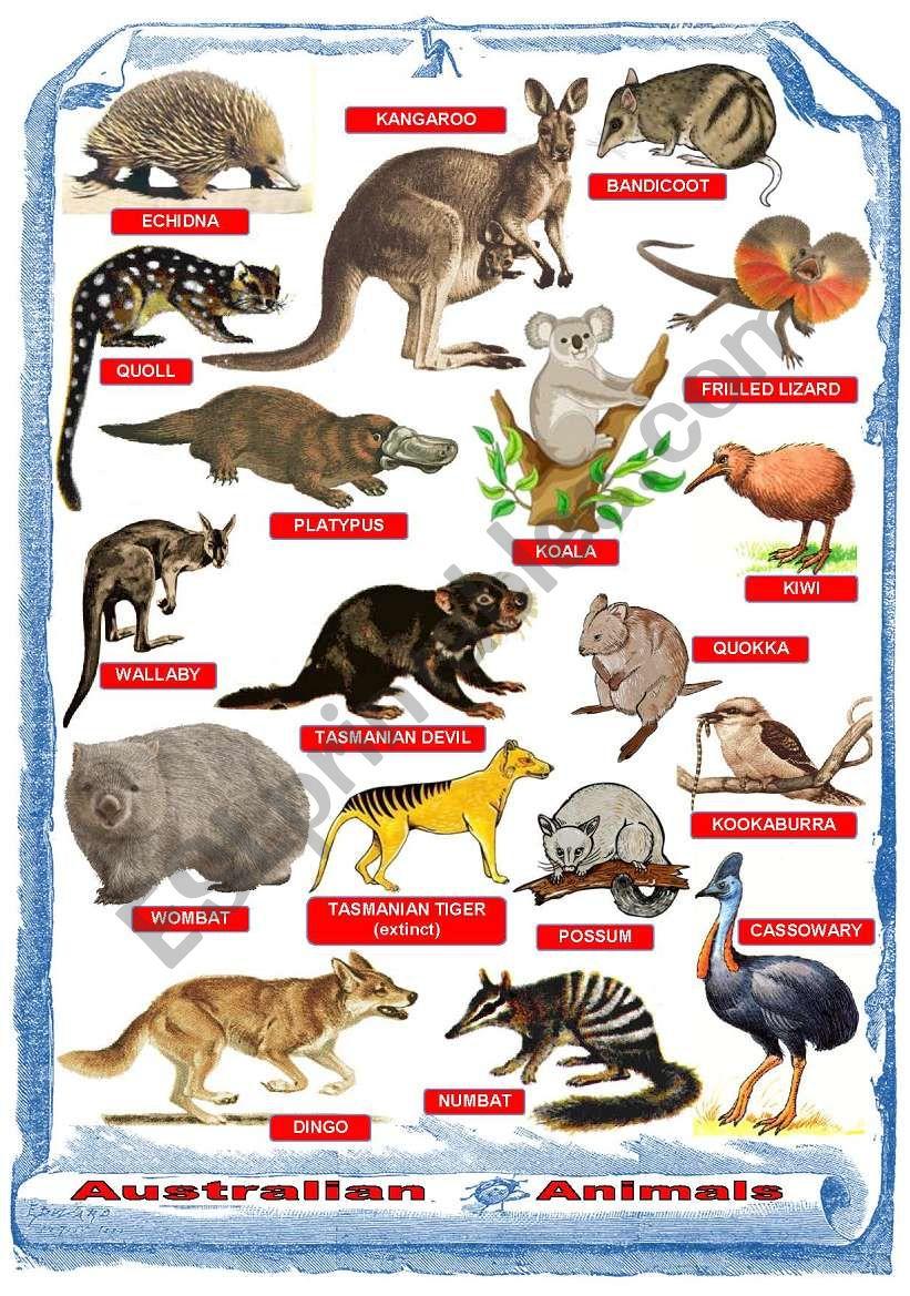 australian animals - poster