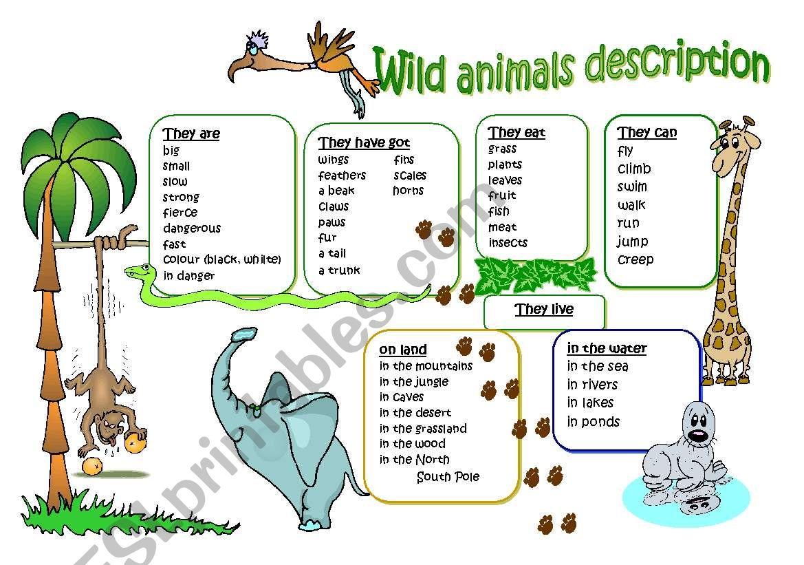 Wild animal description worksheet