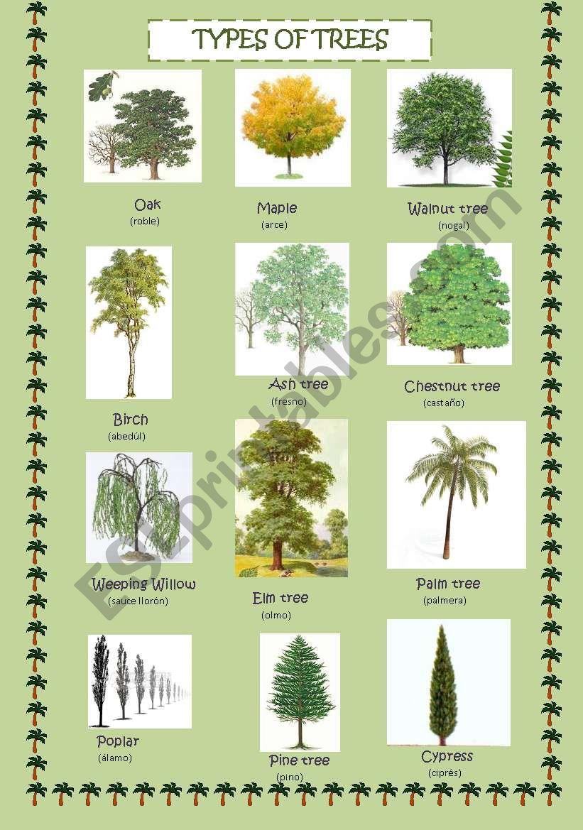 Types of trees   ESL worksheet by neska10