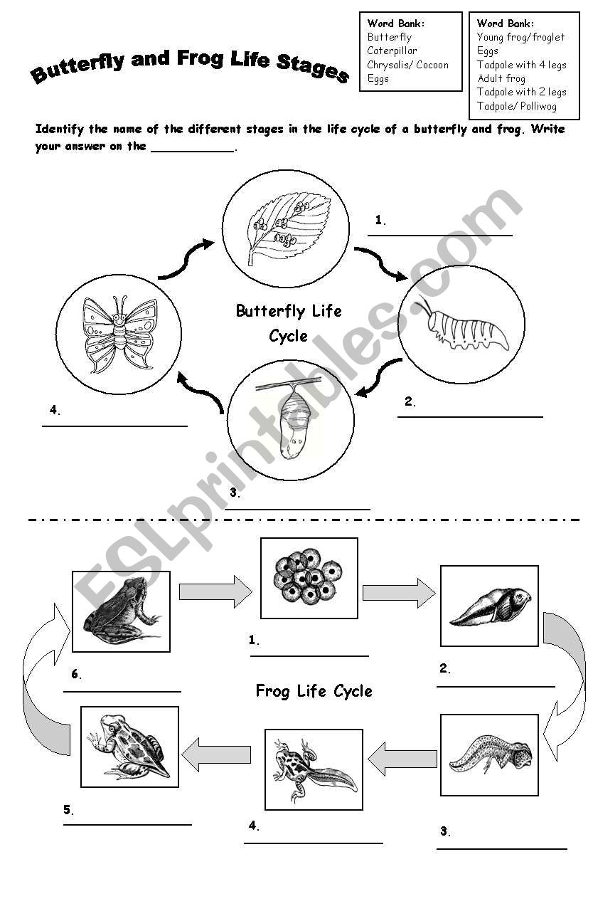 Frog And Butterfly Life Cycle Esl Worksheet By