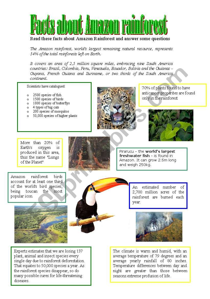 Facts about Amazon rainforest - ESL worksheet by athos466