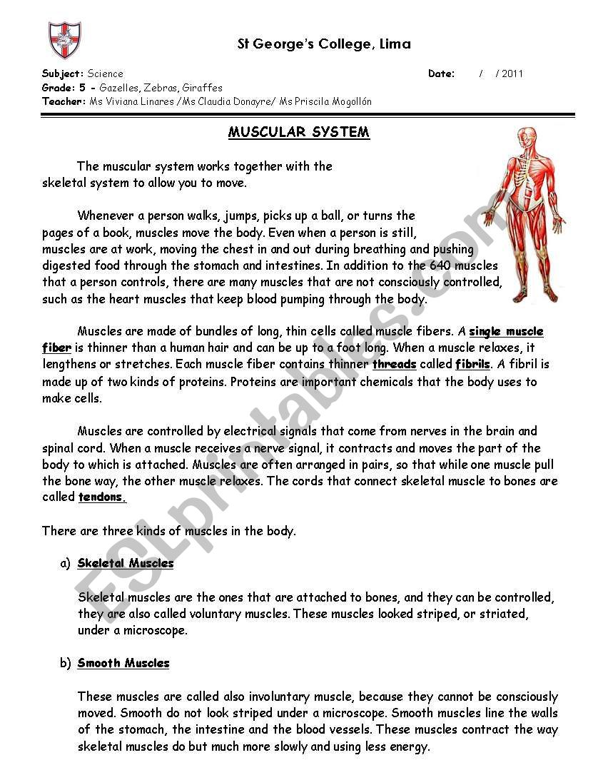 Muscular System Esl Worksheet By Prisci