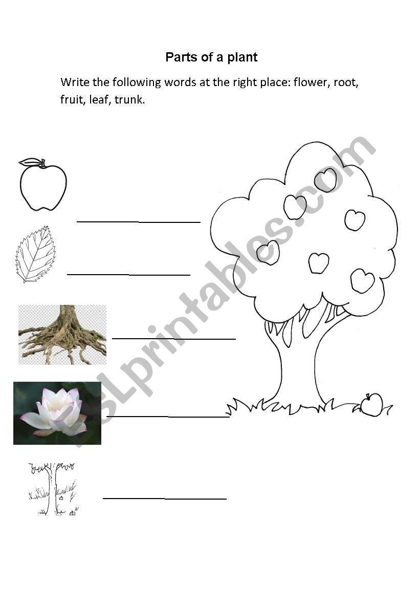 Worksheets Plant Parts Worksheet plant parts esl worksheet by luis salgado worksheet