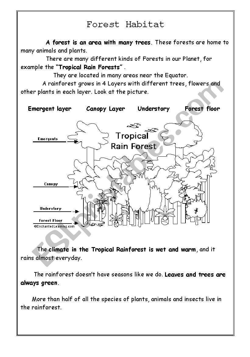 Forest Habitat - ESL worksheet by Supiloca