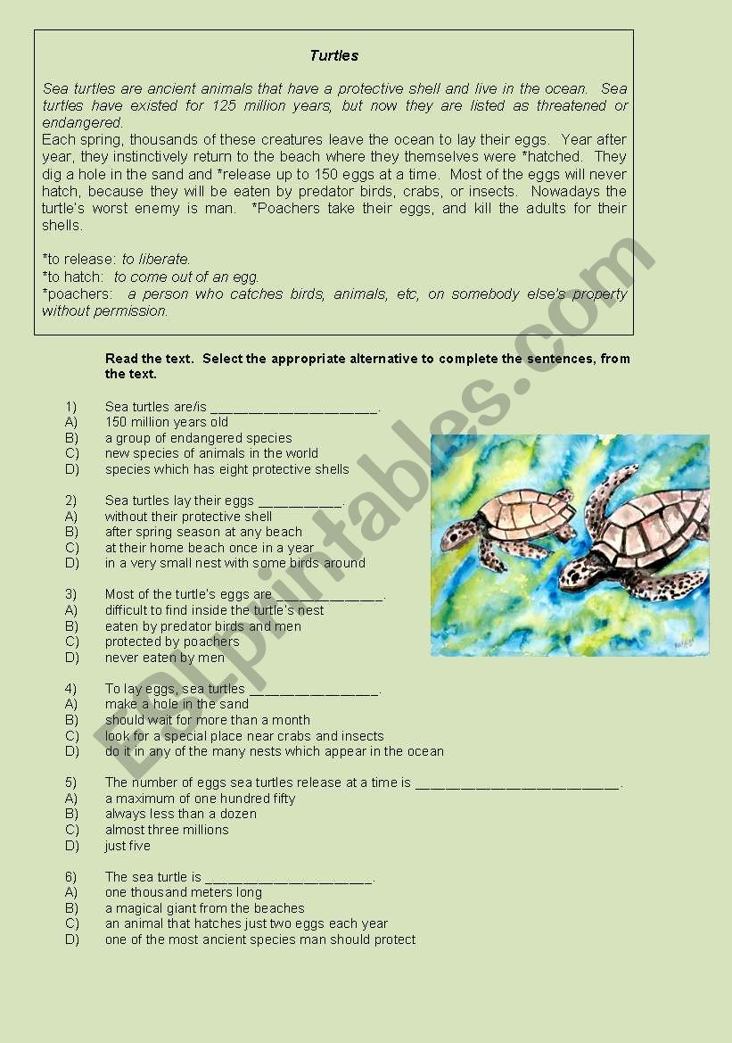 SEA TURTLES. - ESL worksheet by gigi23