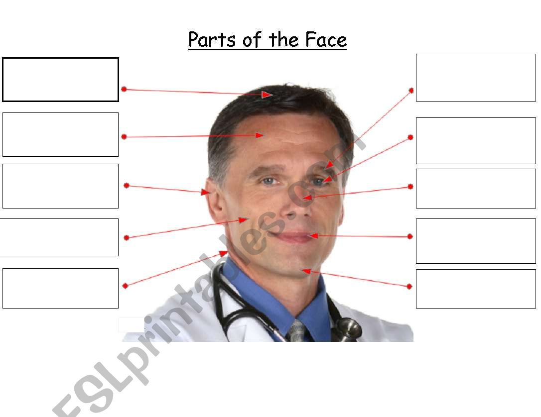 Label parts of the face - ESL worksheet by rebecca77