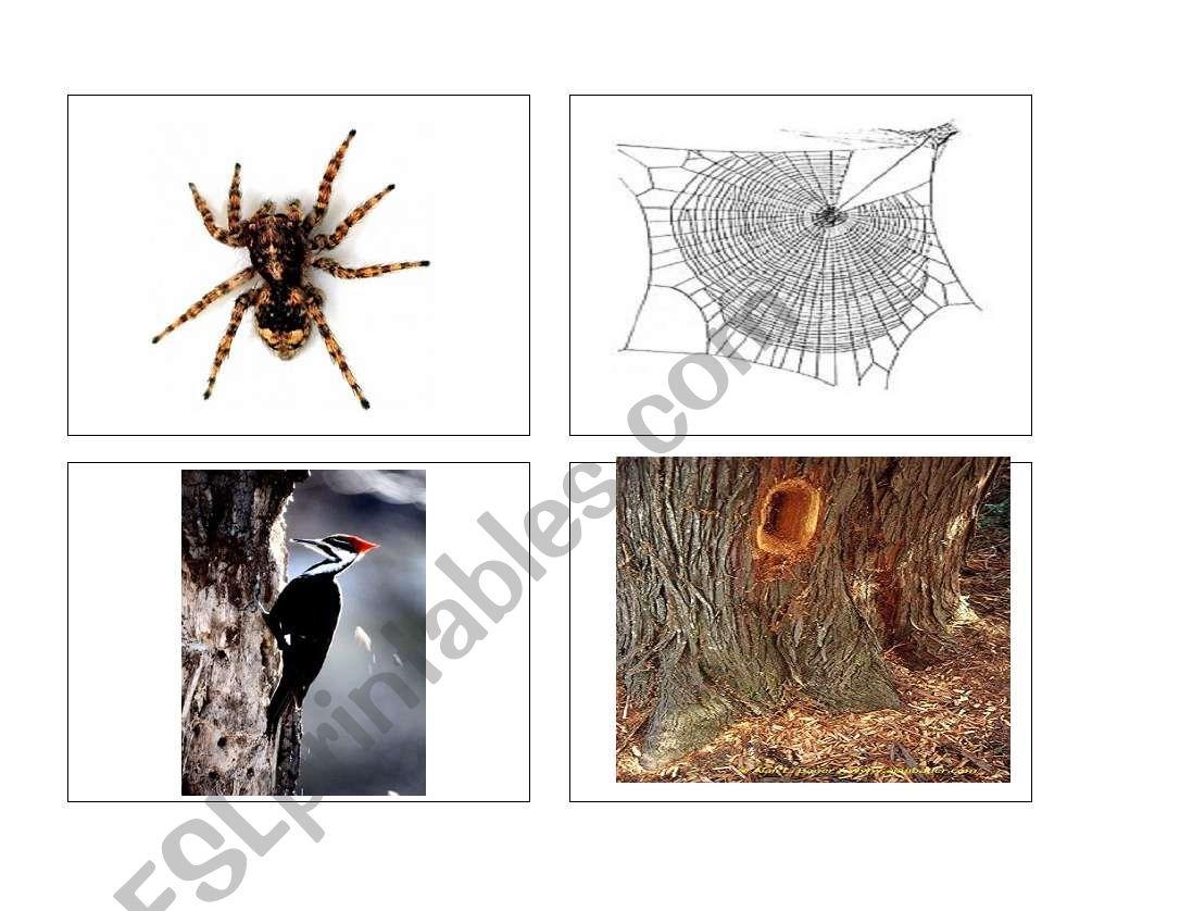 Animal homes (part 4 of 4) worksheet