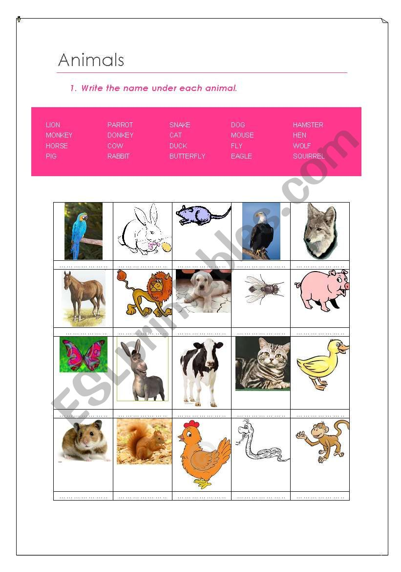 English Worksheets Animals Classification