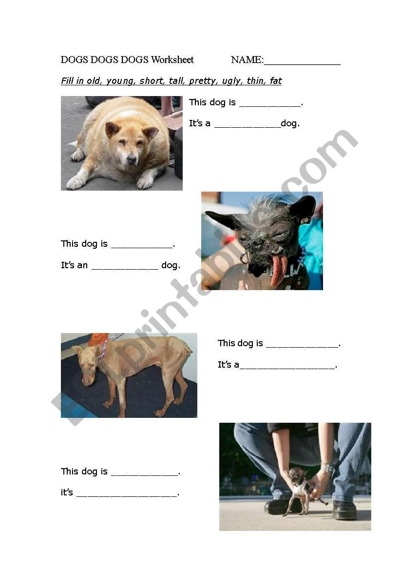 Dogs dogs dogs worksheet