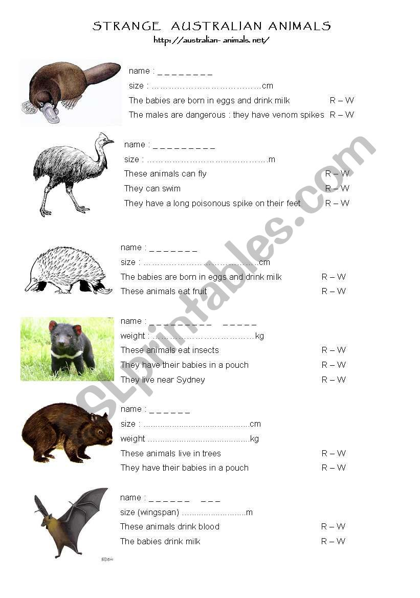 Classification Of Animals in addition Ideal Dog Checklist likewise Dsc together with Original besides Animal Description. on animal needs worksheets