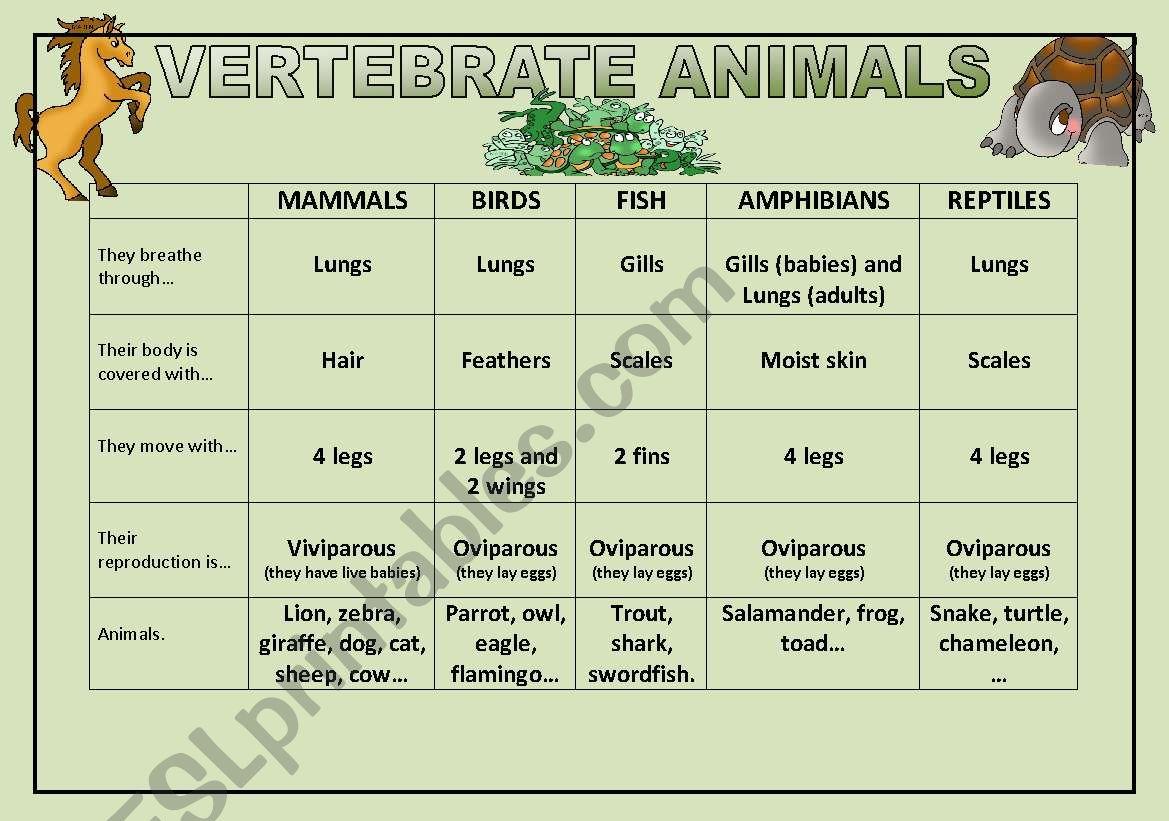 Vertebrate Animals worksheet
