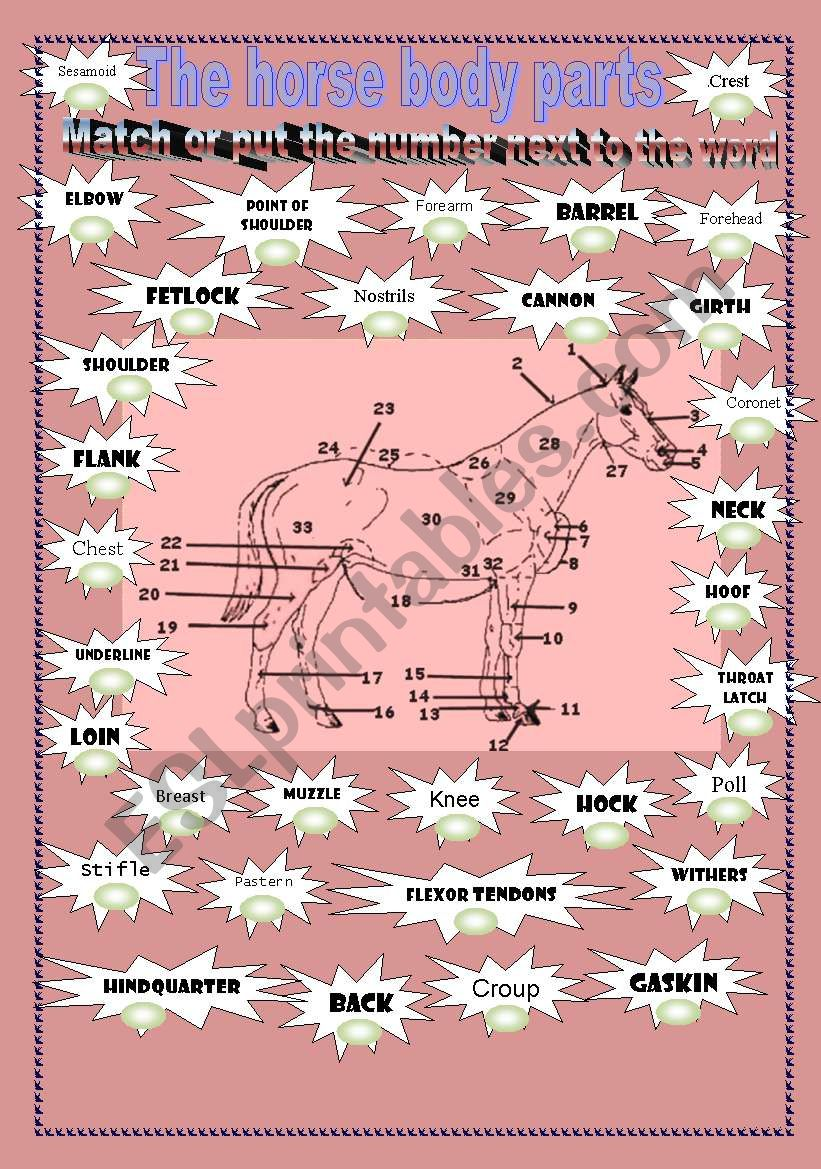 The horse body parts  worksheet