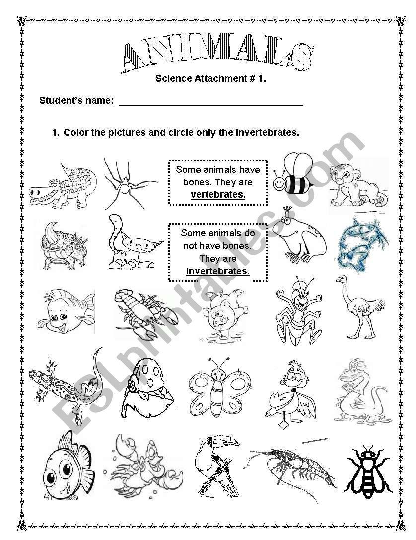 Animals Vertebrates And Invertebrates Esl Worksheet By