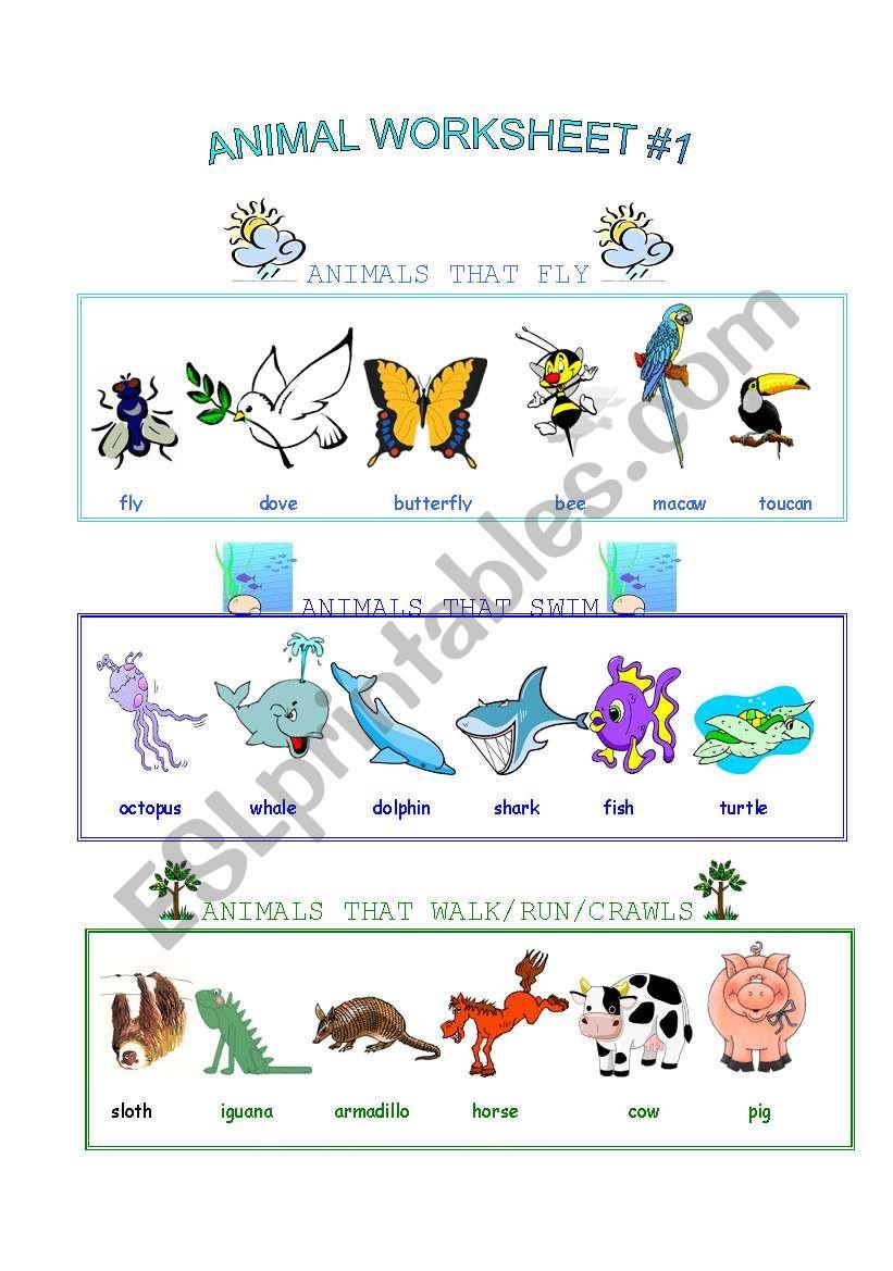 Animal Worksheet worksheet