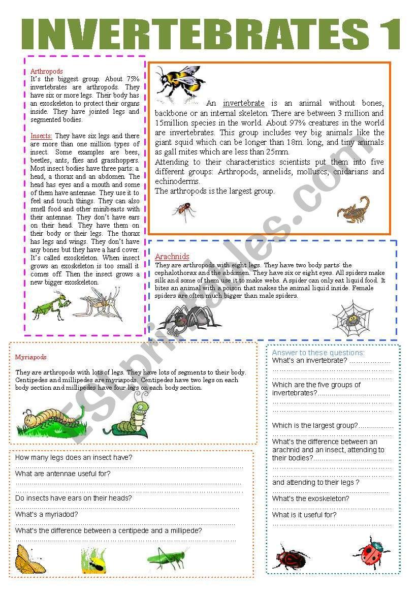 INVERTEBRATES 1 worksheet