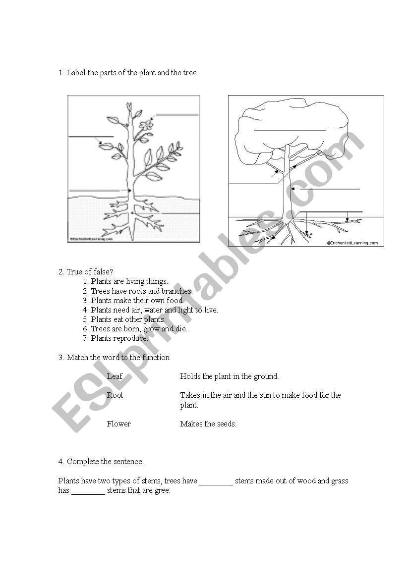 science exam plants esl worksheet by pinzales. Black Bedroom Furniture Sets. Home Design Ideas