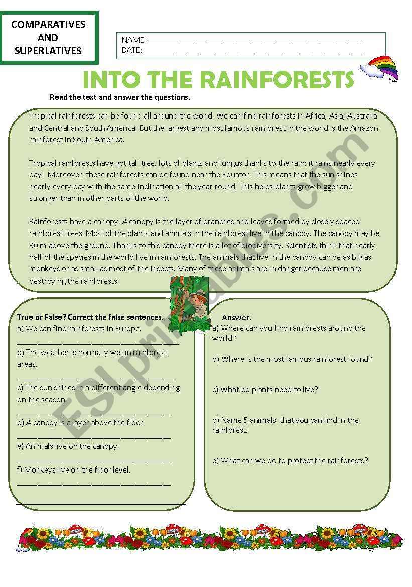 Comparing the rainforest worksheet