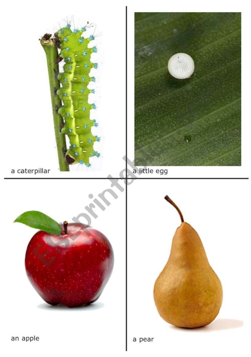 The very hungry caterpillar flash-cards 1 of 2