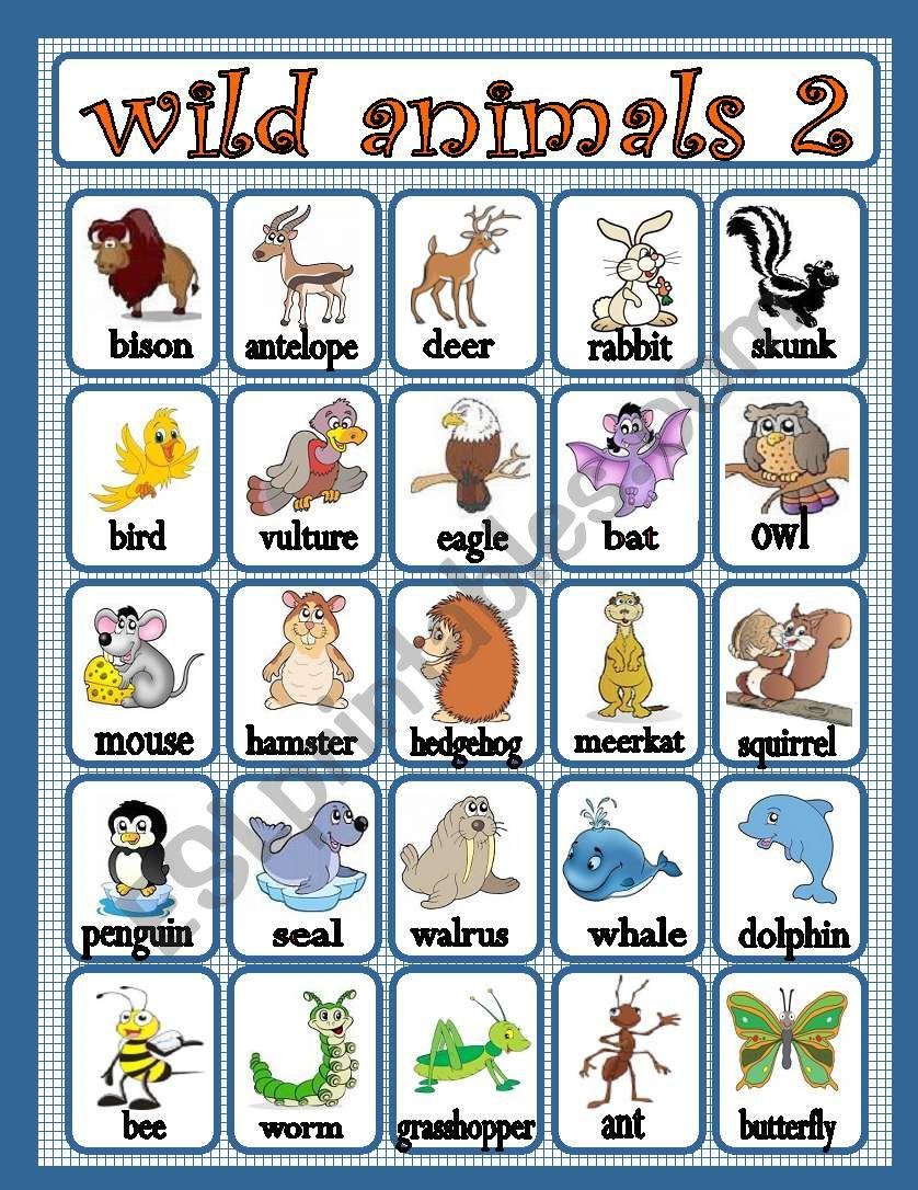 wild animals 2 worksheet