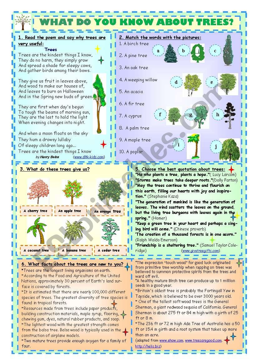 What Do You Know About Trees? worksheet