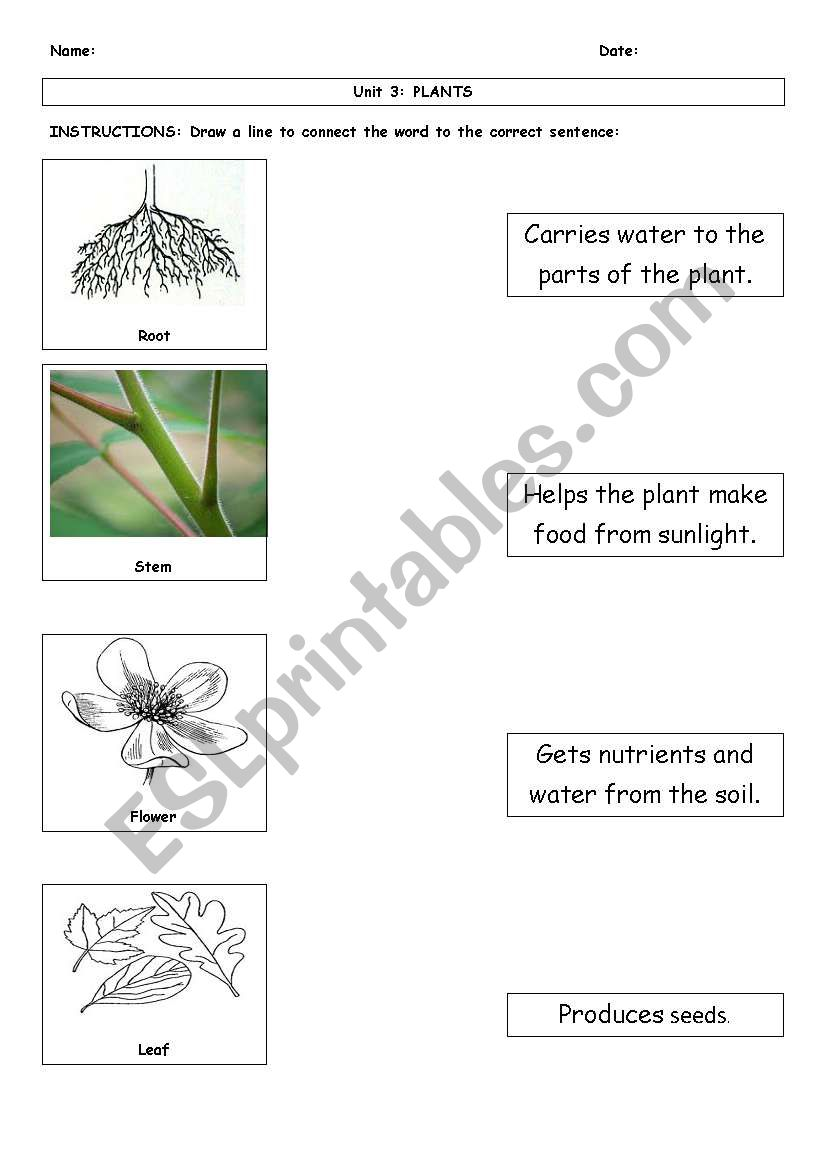 English Worksheets Function Of Plant Parts