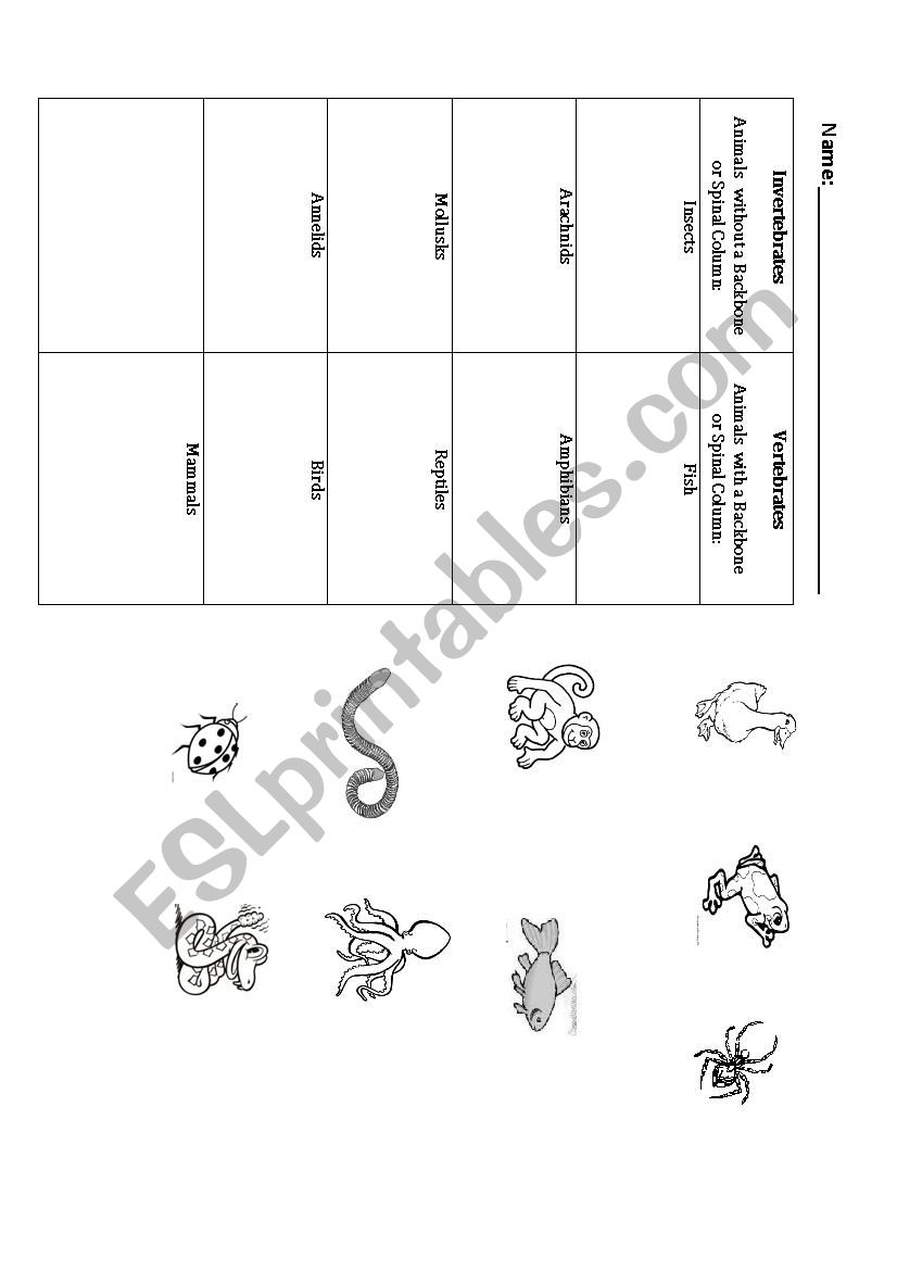 Worksheet Vertebrates And Invertebrates Worksheets Carlos Lomas
