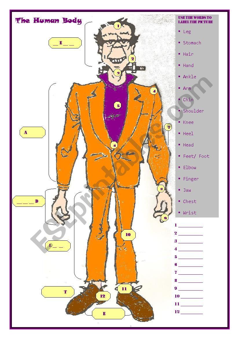 The Human Body worksheet