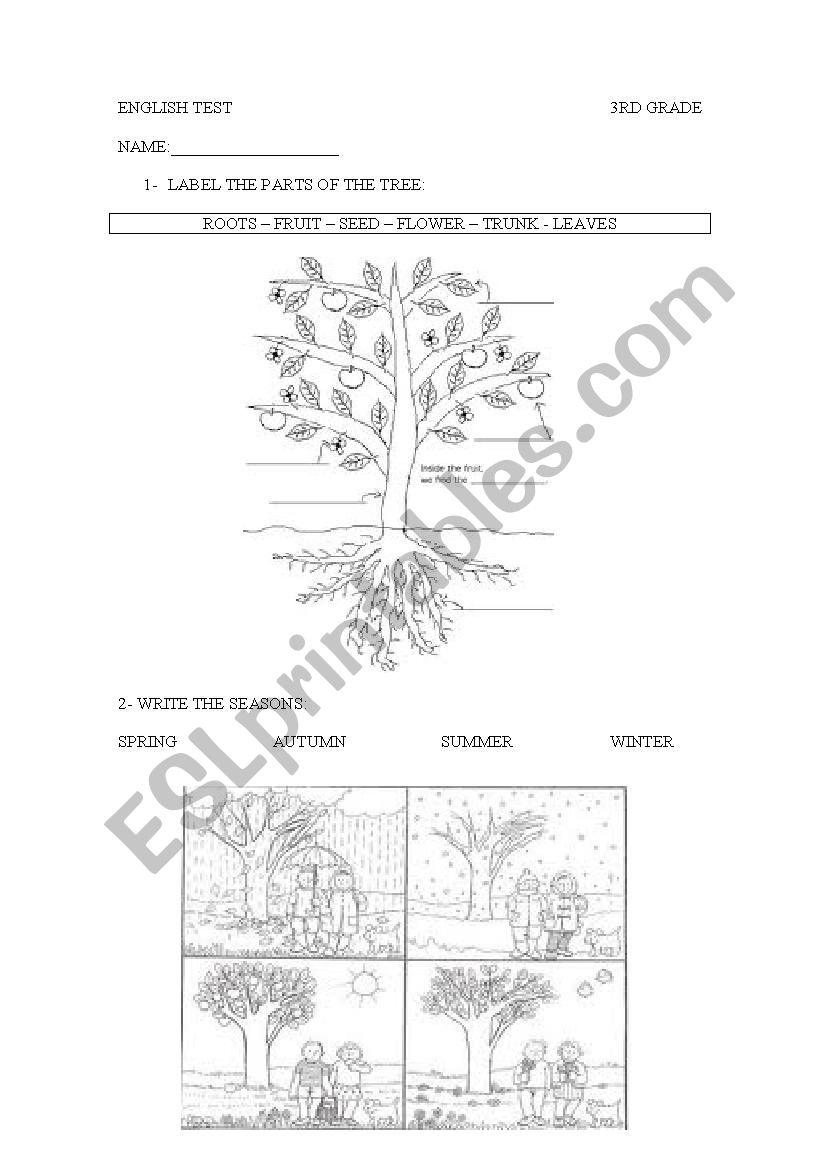parts of the plants worksheet