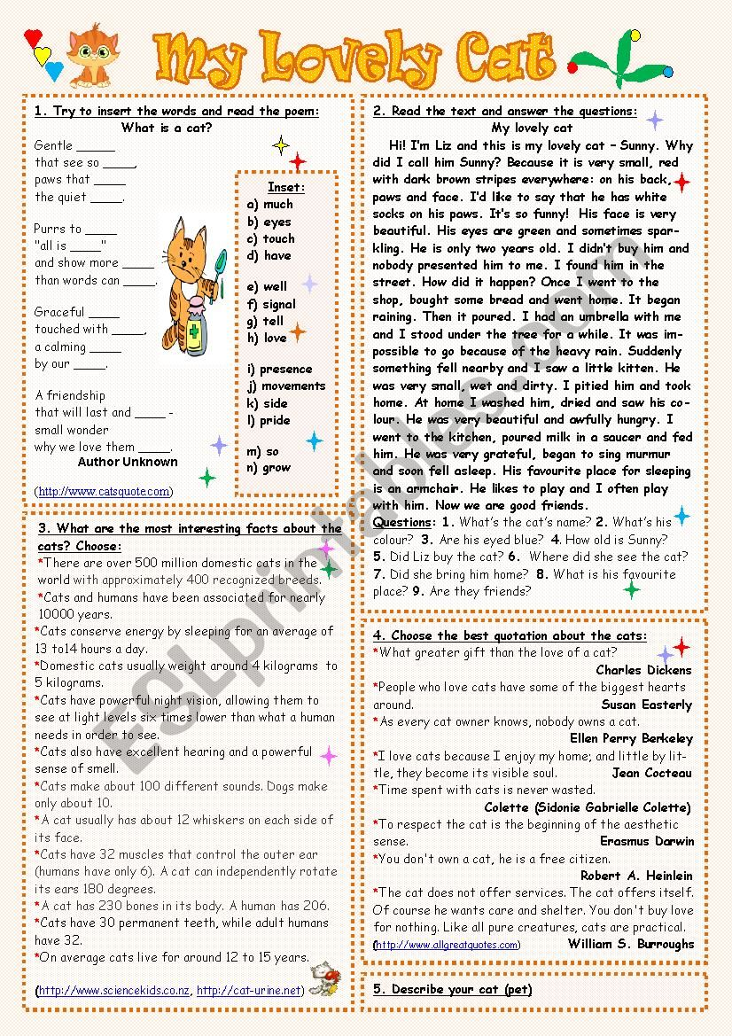 My Lovely Cat worksheet