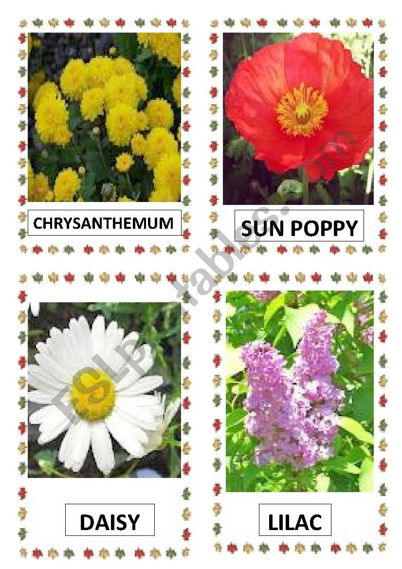 FLOWERS PART-3 worksheet