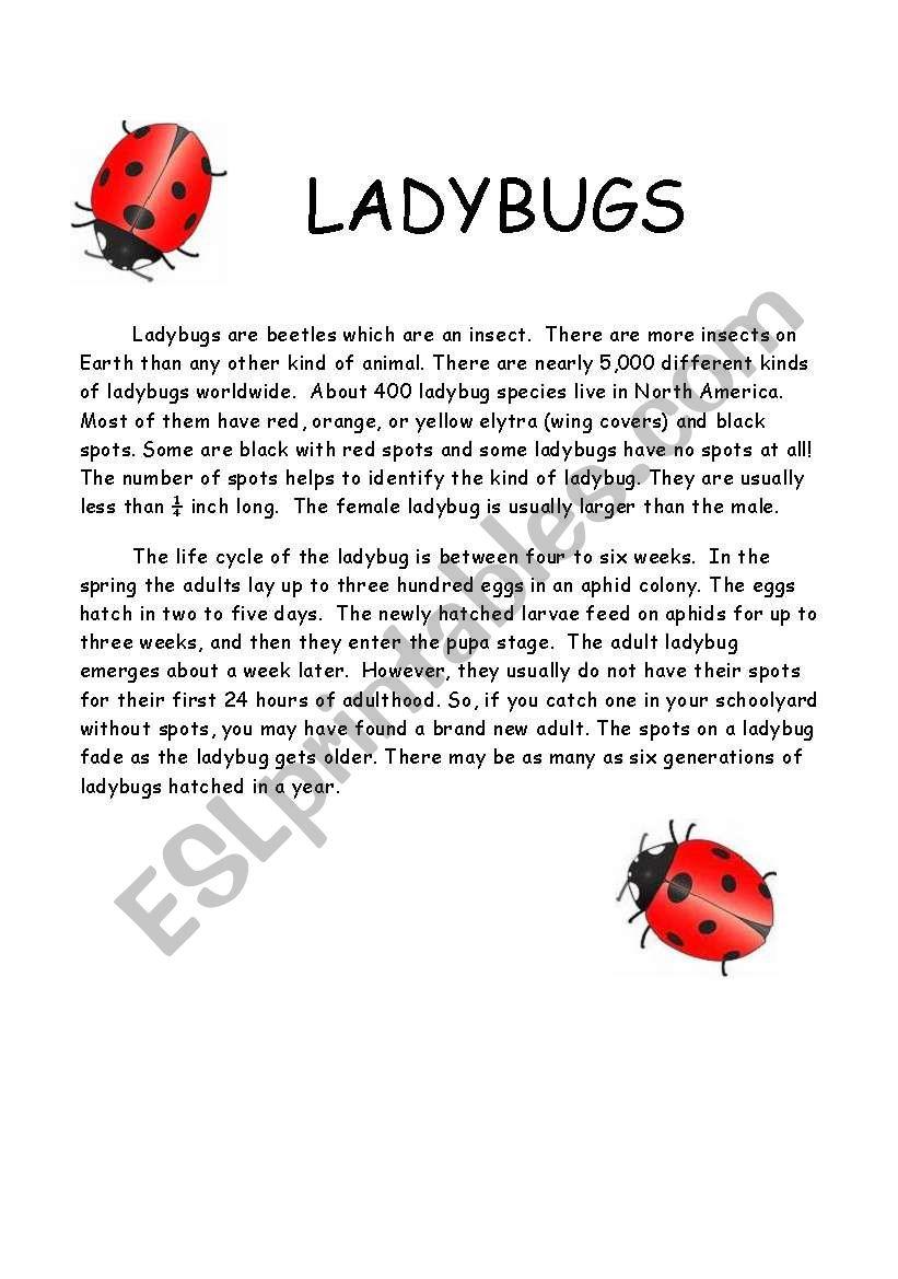Ladybug comprehension and quiz