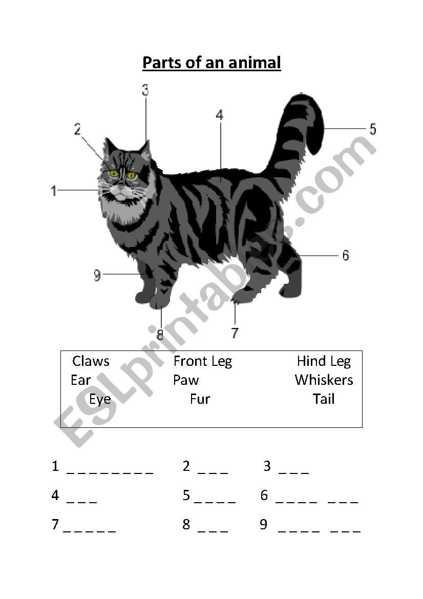 Animal body parts. worksheet