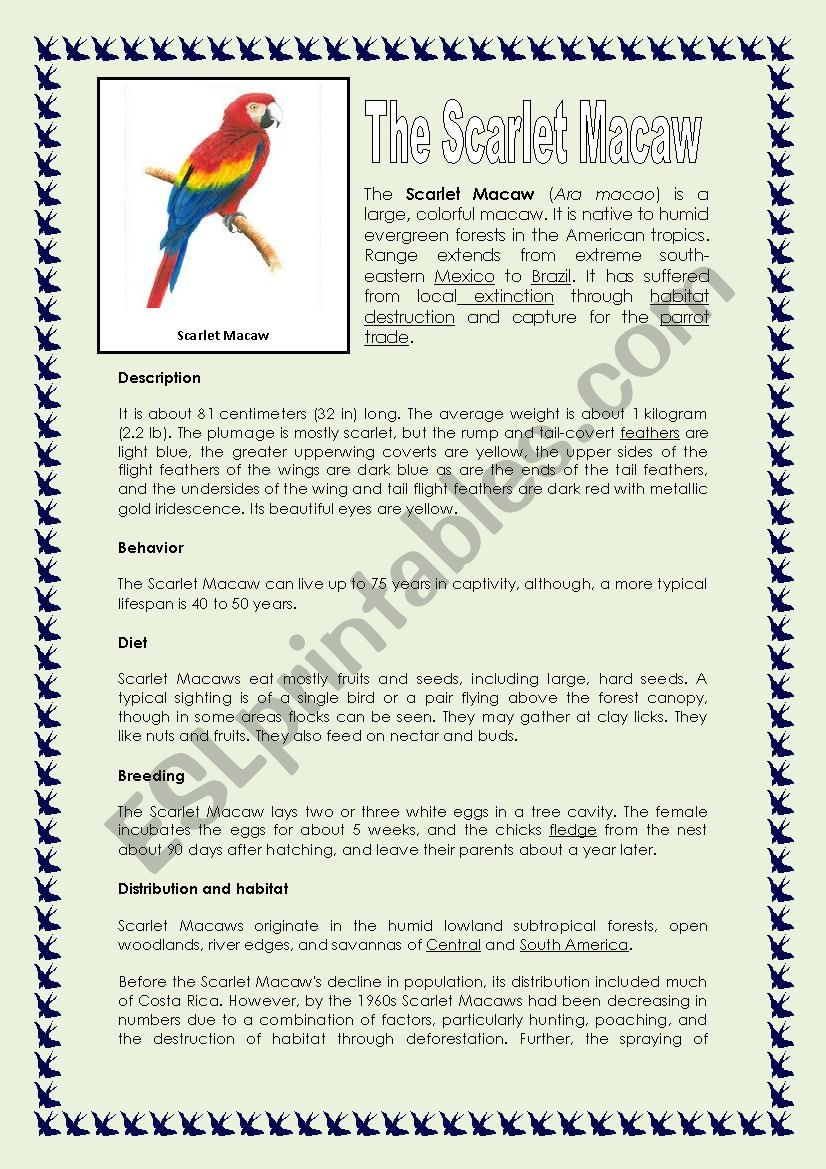 READING: THE SCARLET MACAW - ESL worksheet by Sonyta04