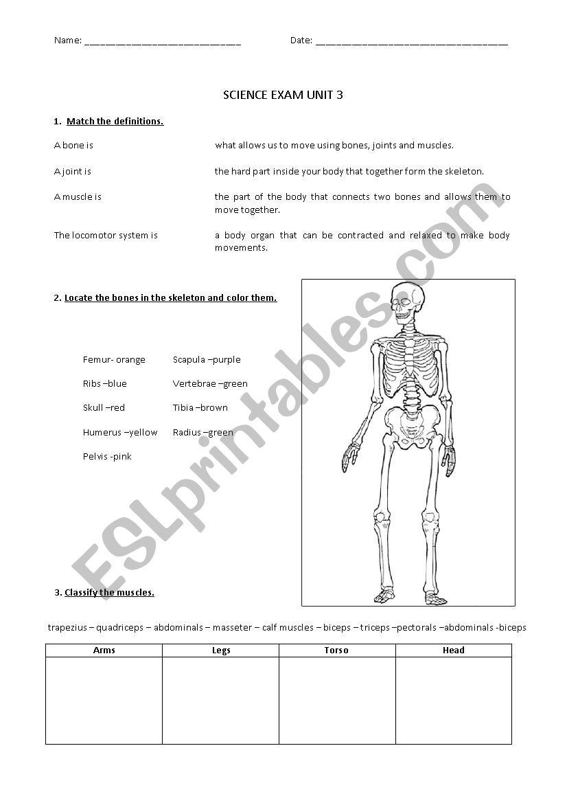 bones science human body esl worksheet by. Black Bedroom Furniture Sets. Home Design Ideas
