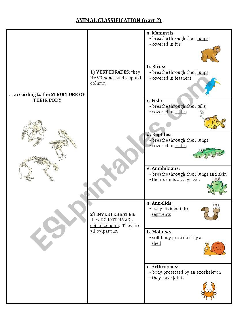 Animal classification (part 2)