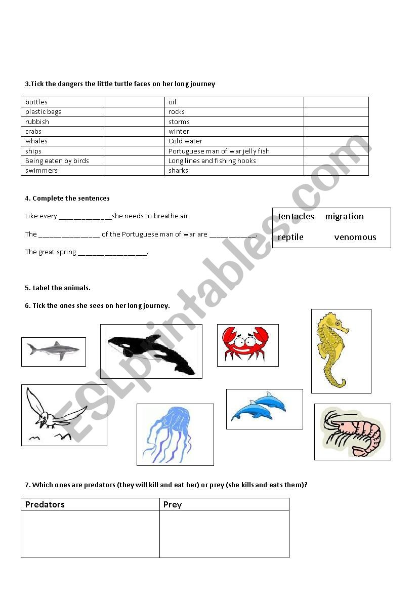 Turtle An Incredible Journey Film Worksheet Esl Worksheet By