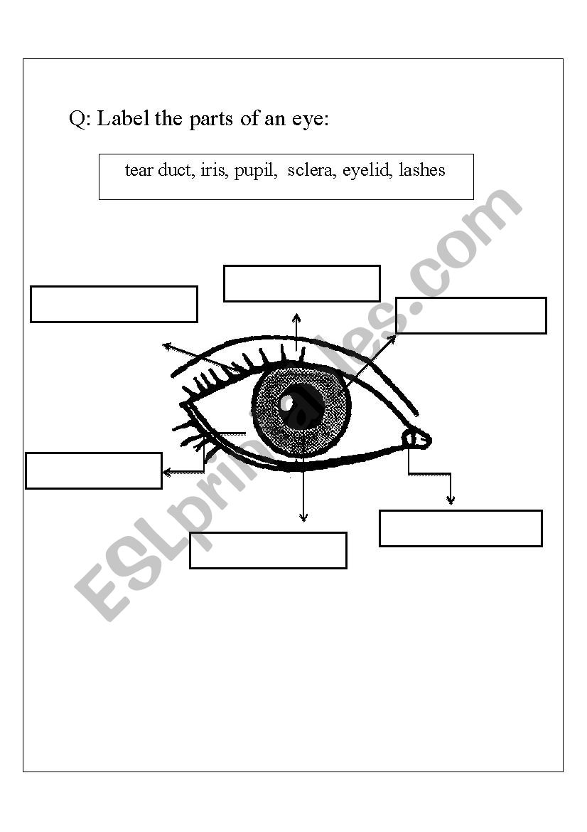 english worksheets  parts of an eye