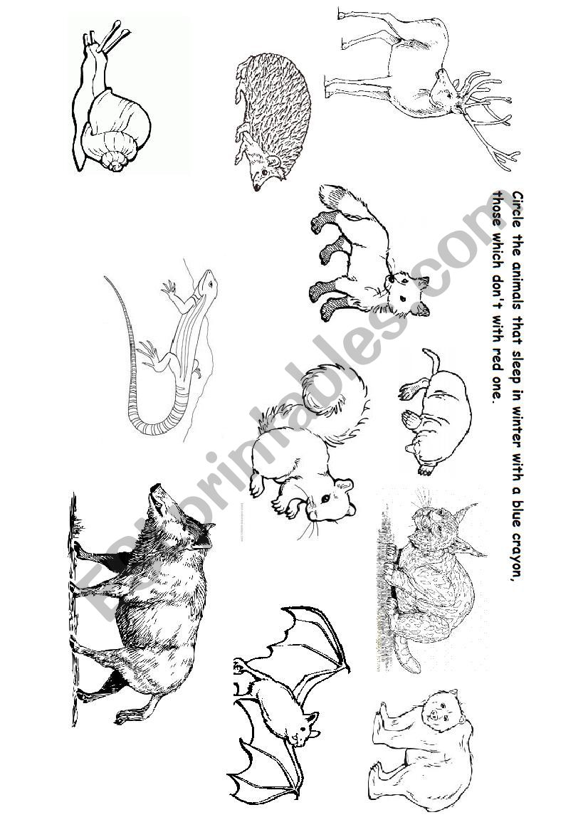 English worksheets: ANIMALS IN WINTER