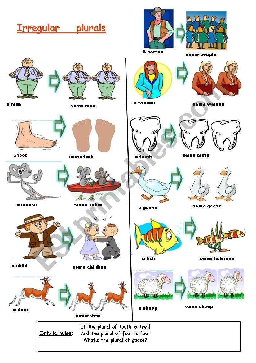 basic irregular plurals worksheet