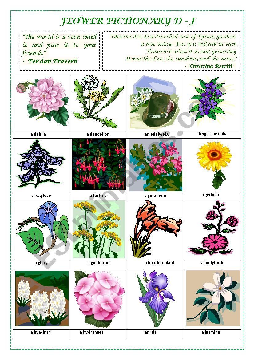 FLOWERS PICTIONARY D- J (part II)