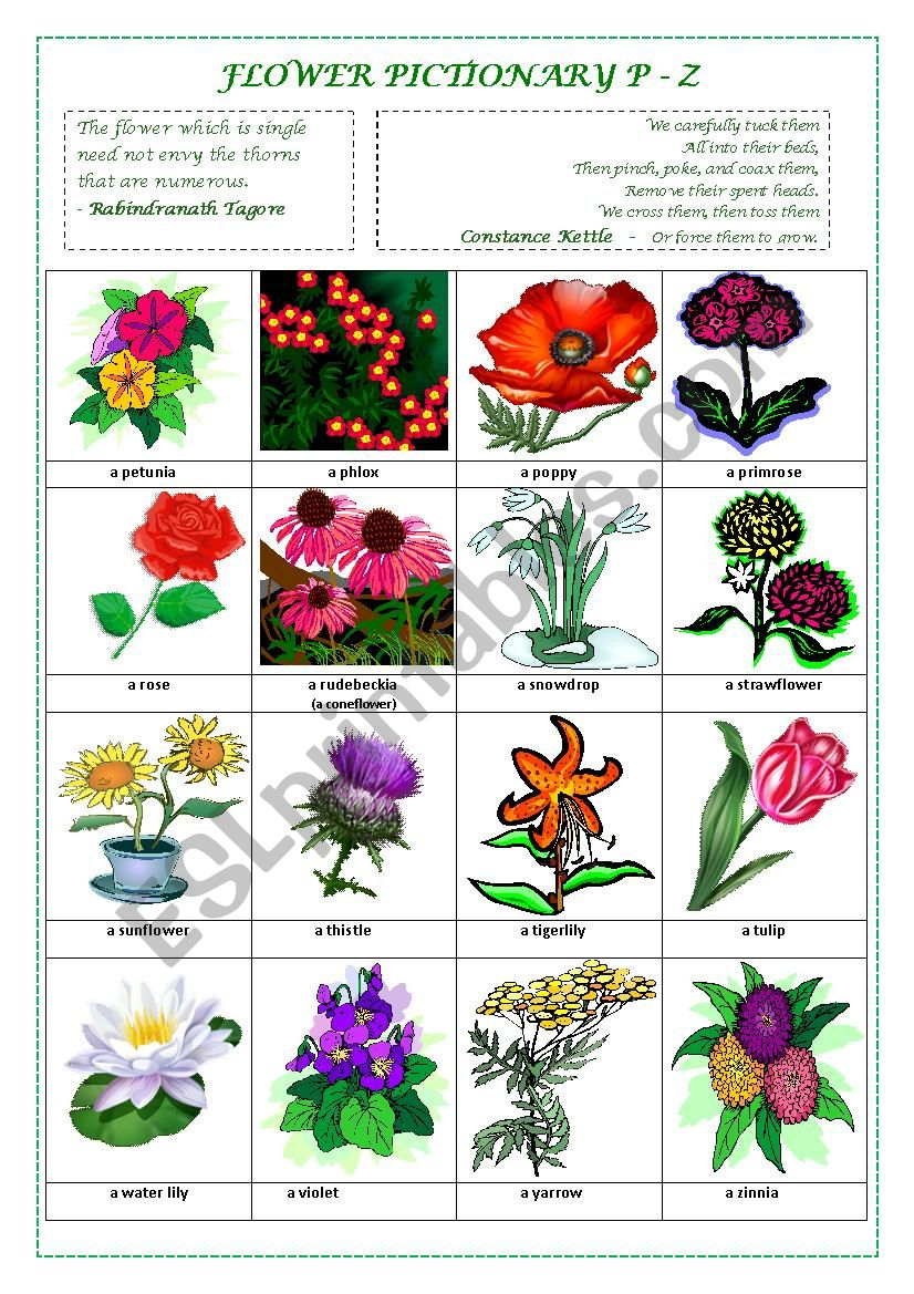 FLOWERS PICTIONARY P - Z (part IV)