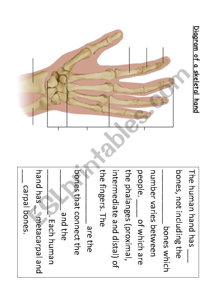 The Bones In The Hand Esl Worksheet By Nicoledsecondstart