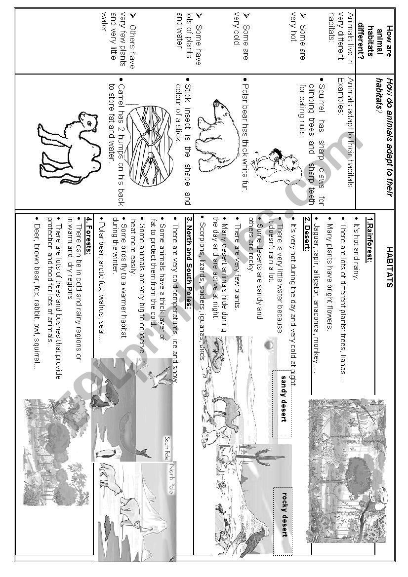 ANIMALS AND HABITATS worksheet