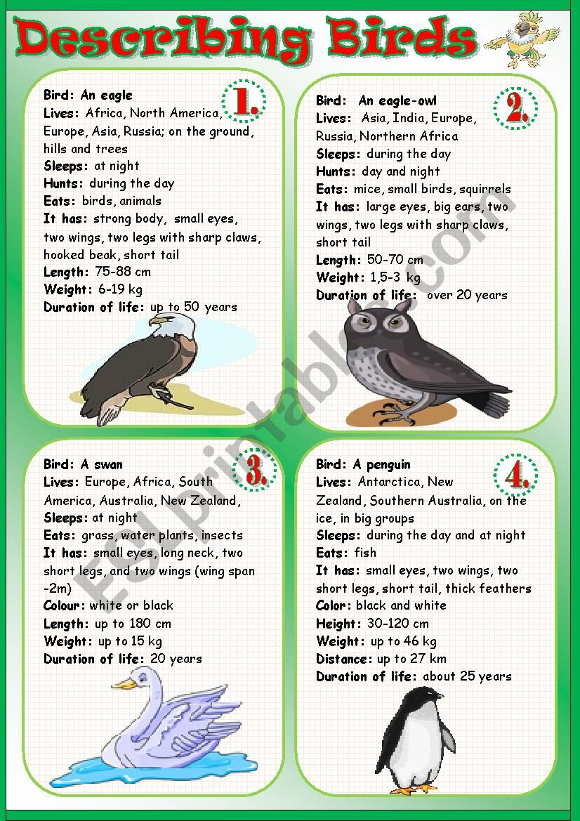 Describing Birds worksheet