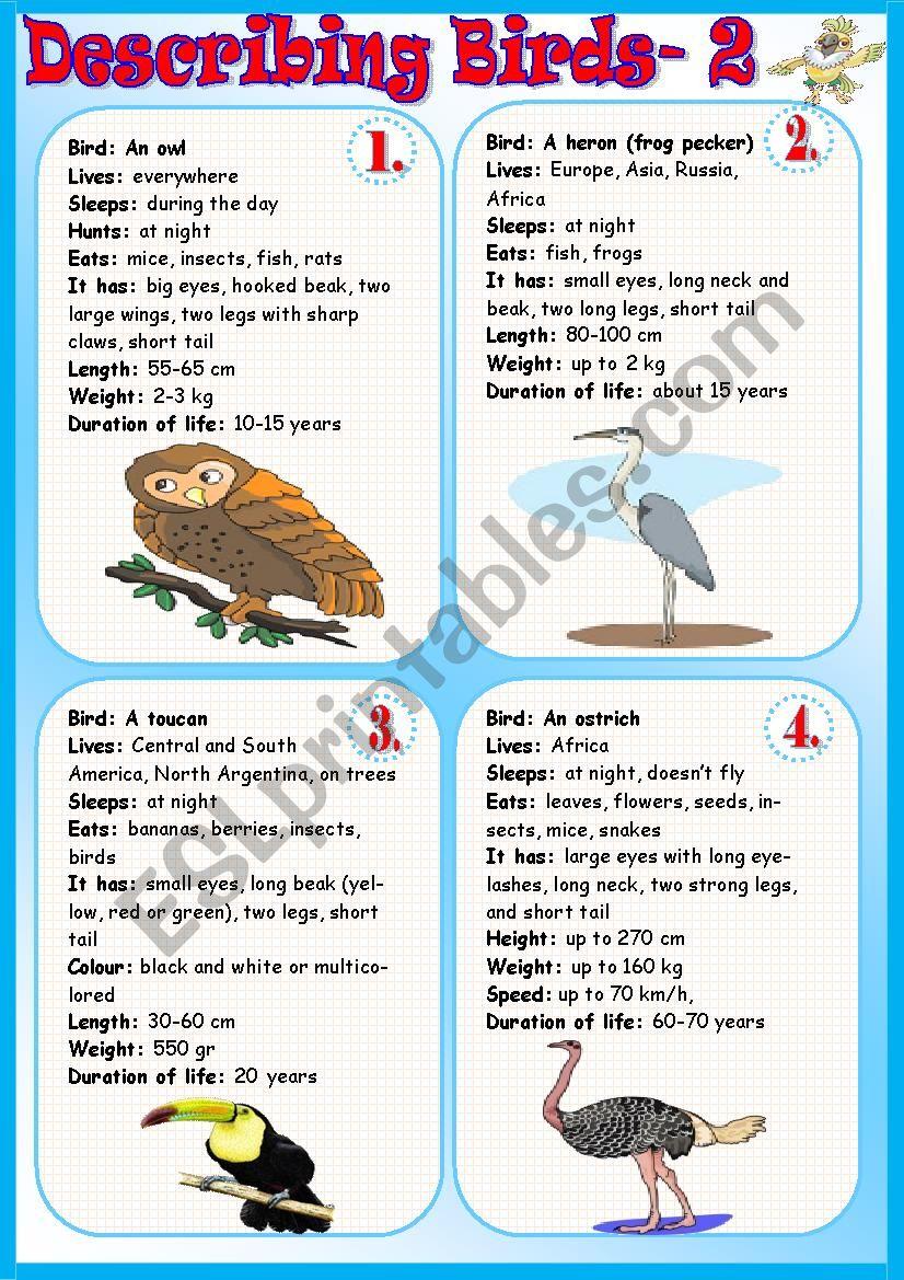 Describing Birds 2 worksheet