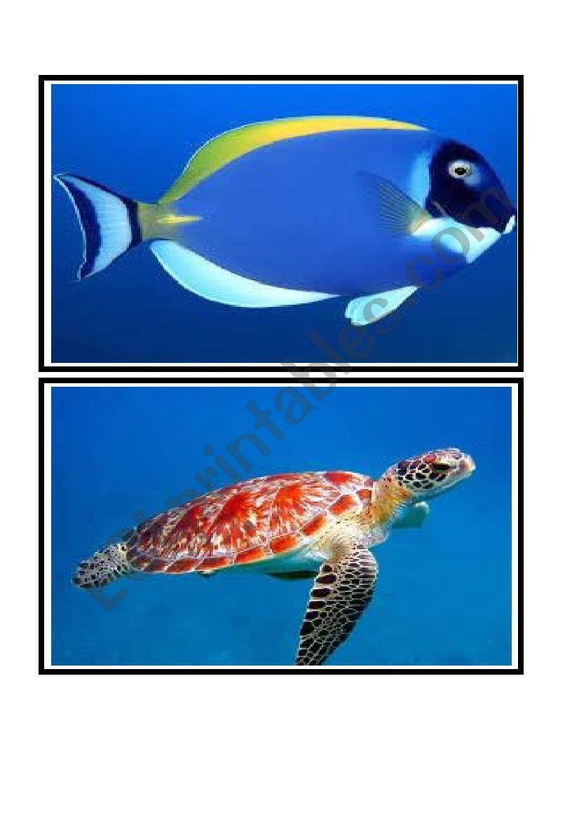 ocean animals flashcards worksheet