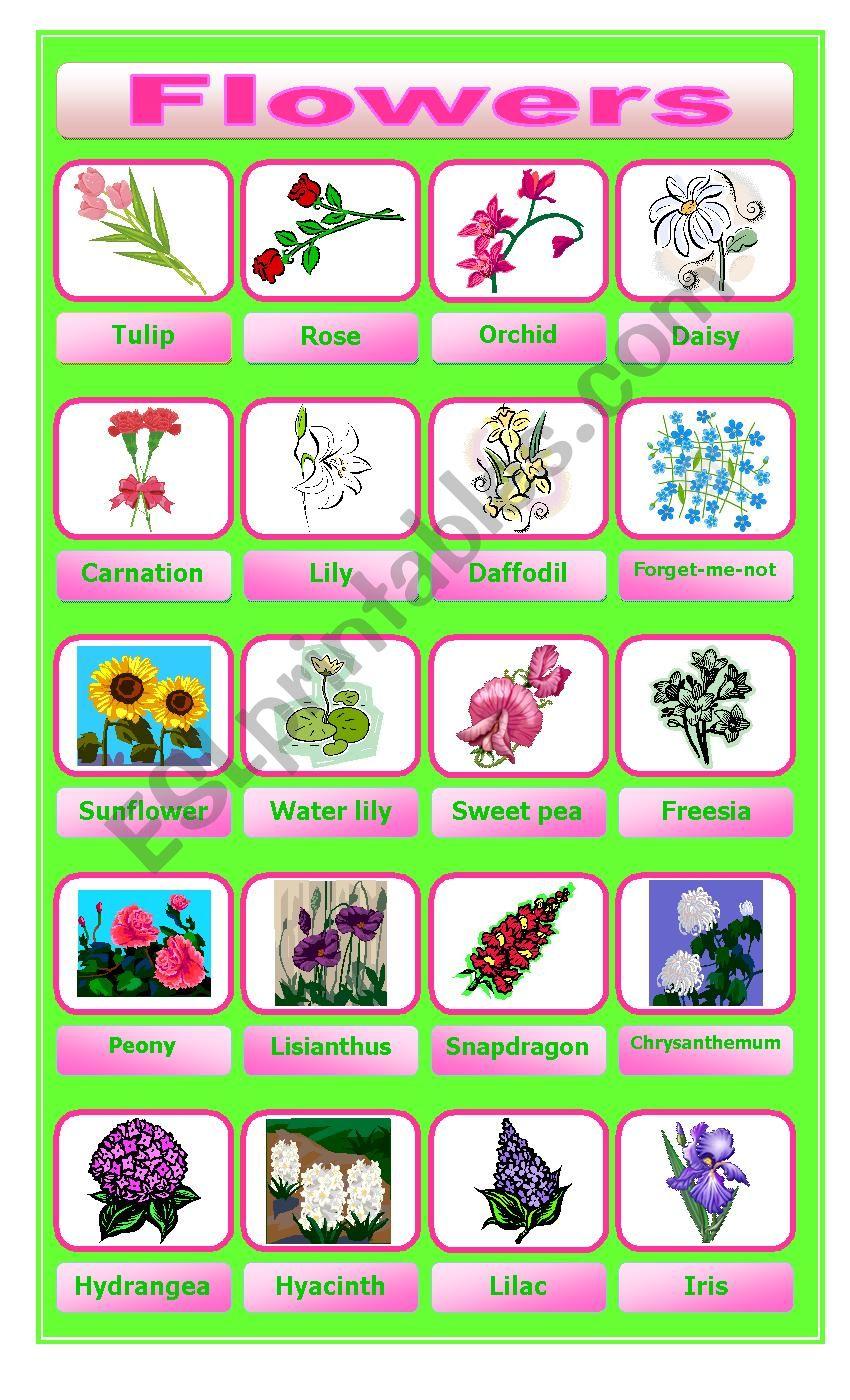 Flower pictionary worksheet