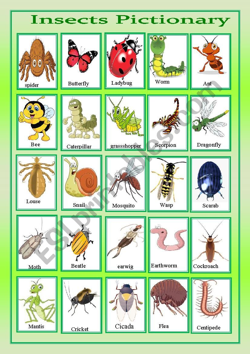 insects pictionary worksheet